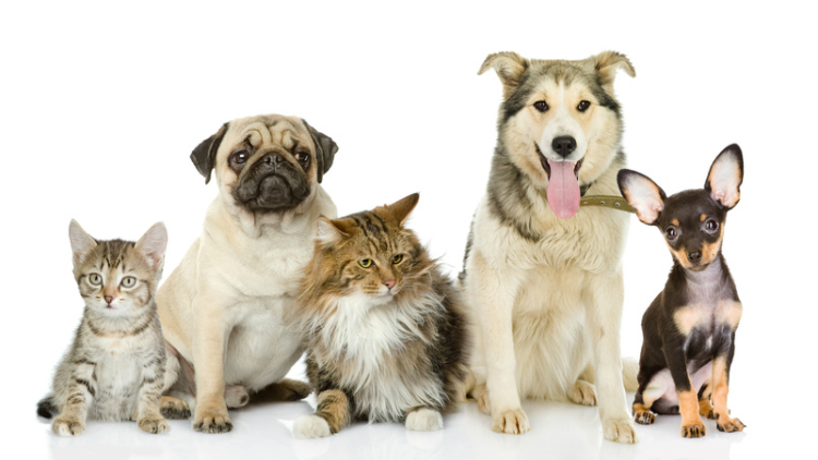 Pet Boarding and Grooming Services